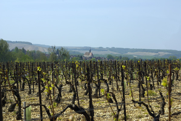 The Chablis vineyards<br />© Multimédia & Tourisme