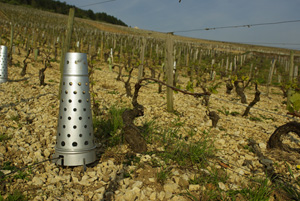 Heating used to fight against the frost in the vineyards © Multim�dia & Tourisme